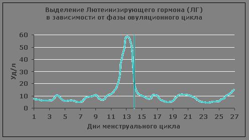 Выделение ЛГ в фазах овуляционного цикла